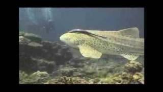 "MV 4 Choy "" Jumping Fish "" โดยพี่ฉอย & Jellyfish band"