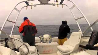 Monterey Albacore Tuna Quad Hookup 8-3-2012