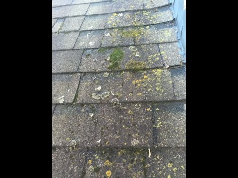 Whats on my Roof? Roof Cleaning Cincinnati