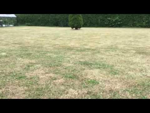 gødning af græsplæne i regnvejr