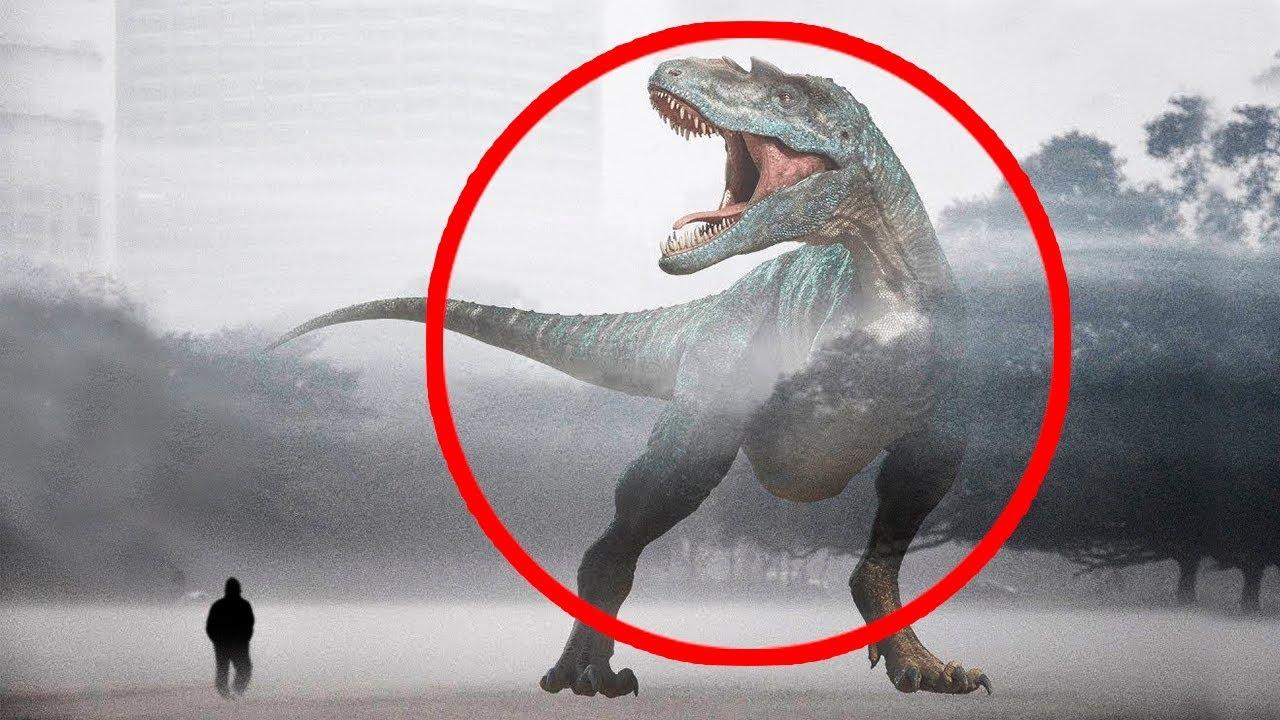 7 Dinosaurios Reales Captados En Camara 2 Youtube La nueva especie es del mismo linaje del tyranossaurus y el velocirráptor. 7 dinosaurios reales captados en camara