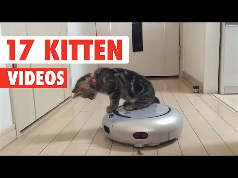 17 Cute Kitten Videos Compilation 2017