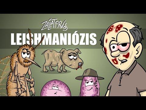Leishmaniózis - csak egyszerűen