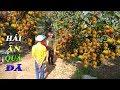 Đột nhập vào VƯỜN CHÔM CHÔM trái xum xuê tại xã CÙ LAO TÂY | Đồng Tháp