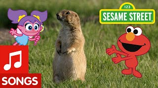 Sesame Street: Dance Like a Prairie Dog! | Animal Dance #6