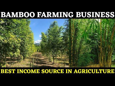Bamboo Farming Business | Bamboo Cultivation | Baas Ki Kheti Jankari