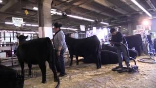 The Angus Report, Jan. 26, 2015: NWSS Herdsman of the Year