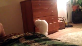 Застрявшая лапа у кошки или нехер лезть
