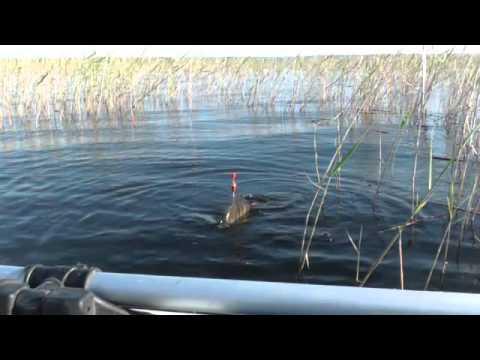 рыбалка на поплавок видео