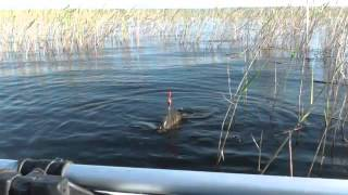 Классная рыбалка и ловля крупного карася на поплавочную удочку В СЕКРЕТНОМ МЕСТЕ(Рыбак видео для тебя. Проверь себя захотелось на рыбалку? Если да подписывайся на канал и ставь палец вверх...., 2013-06-19T03:03:39.000Z)