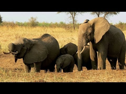 Tanzania: Tarangire National Park - Wonderful Elefant Sanctuary