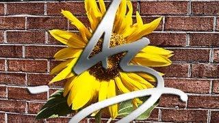 a sunflower s life time lapse final cut a³