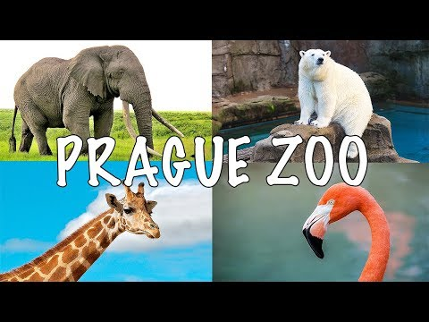 Prague Zoo - One of the Best in Europe