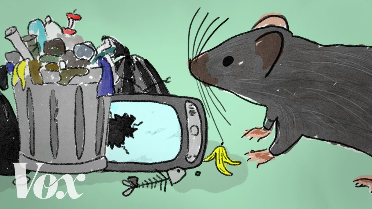 how-rats-take-advantage-of-human-failure