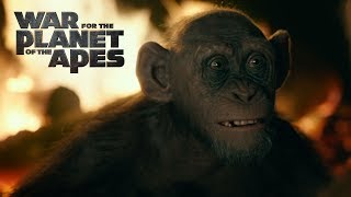 War for the Planet of the Apes | Meeting Bad Ape | 20th Century FOX