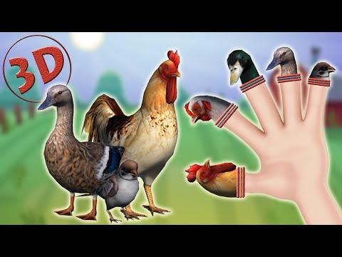 3D Farm Birds Finger Family Song   3D Daddy Finger Animal Nursery Rhyme For Children