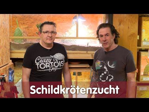 Reptil TV - Folge 114 – Schildkrötenzucht