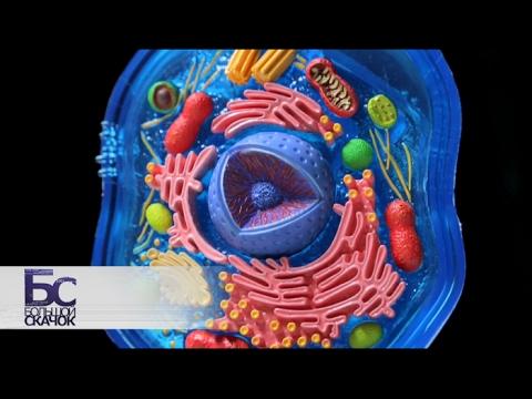 Как выглядит клетка листа