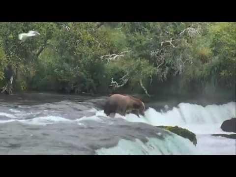 Brooks Falls - Katmai National Park, Alaska