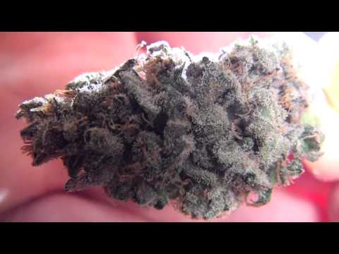Showing Different Medical Marijuana Strains (All Indoor And Organically Grown) (1080p) (HD)