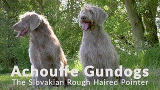Achouffe Gundogs & The Slovakian Rough Haired Pointer