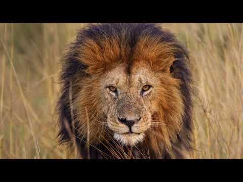 The Lion Sleeps Tonight Cover  Harrison Thomas