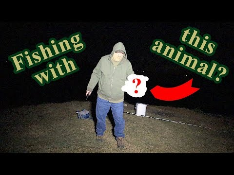 Fishing WITH The Most DANGEROUS Animal In North America???