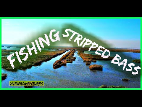 ★Fishing Striped Bass| Pittsburg Marina | California★