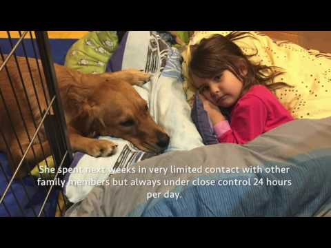 Golden retriever puppy with severe hip dysplasia