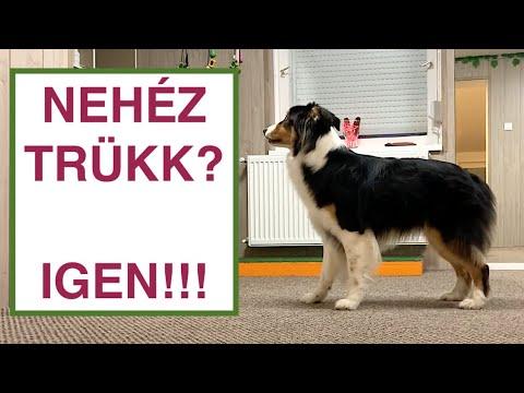 Dog Dancing lépésről - lépésre. Hogyan tanítsuk az előreküldést? 2
