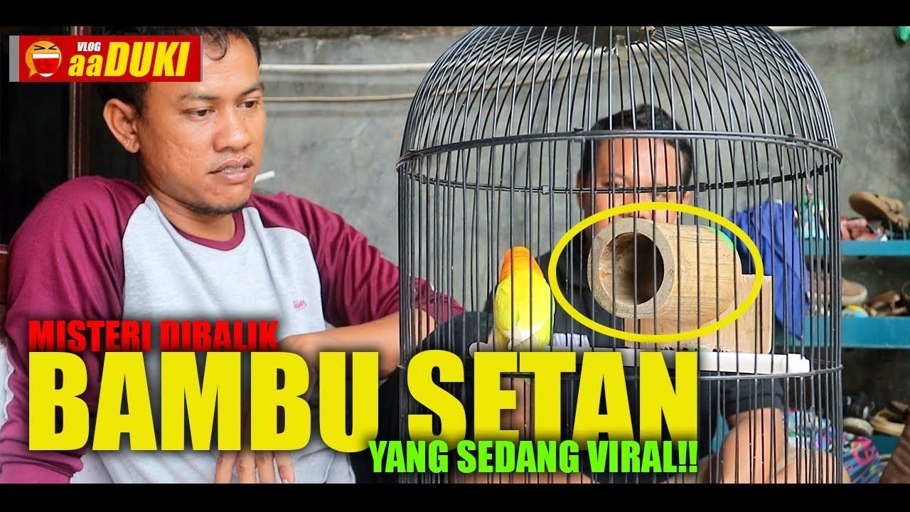 Misteri Dibalik Bambu Setan Yang Sedang Viral Youtube