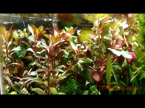 Aquascaping News for the Week - YouTube