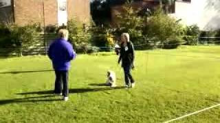 Rosie In Obedience Class At Nuneaton Dog Training Club 4th Place