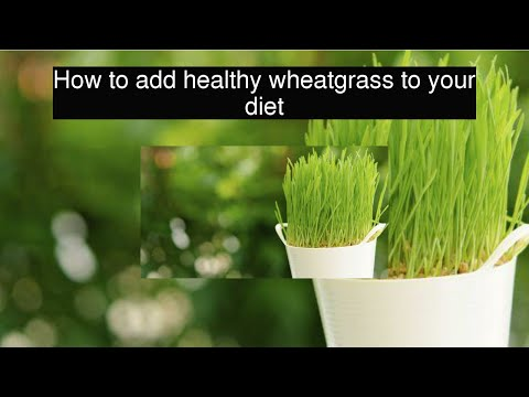 How to add healthy wheatgrass to your diet
