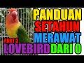 Panduan Setahun Merawat Lovebird Part   Mp3 - Mp4 Download