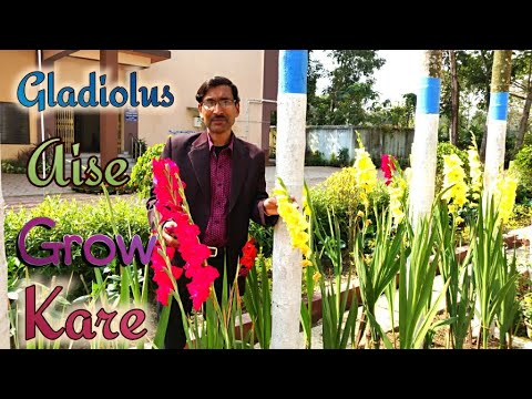 Gladiolus Gharme Aise Grow Kare Hindi Urdu Youtube