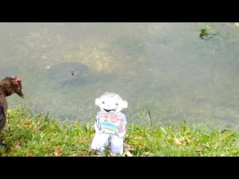 Julia Smith's Flat Stanley feeding turtles 2