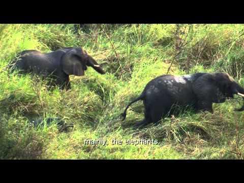 National Parc of Quirimbas thumbnail
