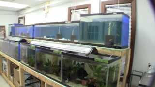 The New Ted's Fishroom