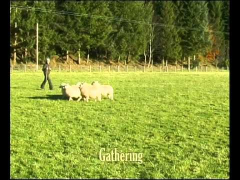 Border Collie Rescue - A Useful Dog - Episode 2
