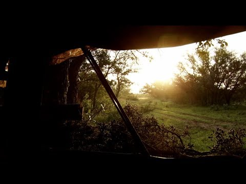 Hunting Whitetail Deer Out of Pop Up Blinds