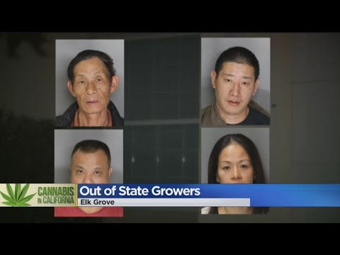 Out-Of-State Pot Grows Infiltrating Elk Grove Neighborhoods