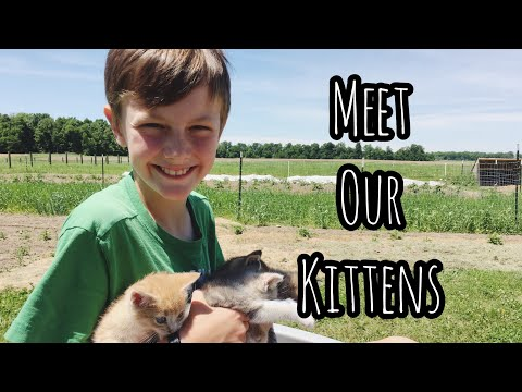 Meet our KITTENS! | Front Porch Catholic VLOG
