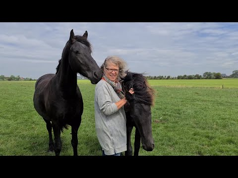 I explain everything to a very special guest about our Friesian horses.