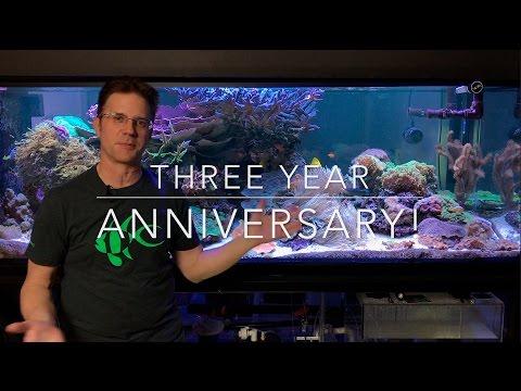 3 Year Anniversary of my reef