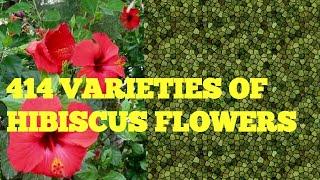 Wonderful , really wonderful....414 varieties of Hibiscus flowers