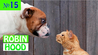 ПРИКОЛЫ 2017 с животными. Смешные Коты, Собаки, Попугаи // Funny Dogs Cats Compilation. Февраль №15