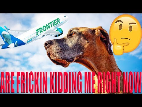 Guy accused of punching service dog and pregnant deaf lady on Frontier flight to Miami  #RHEC