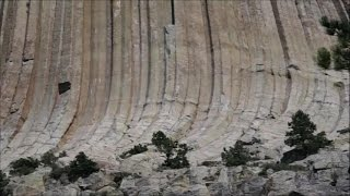 Skamienieliny  Prehistorycznch  Drzew - Gigantyczne Drzewa rosly na Ziemi