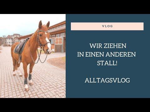 [Vlog] Wir wechseln den Stall + Alltag | SSW39 | 02.03.19